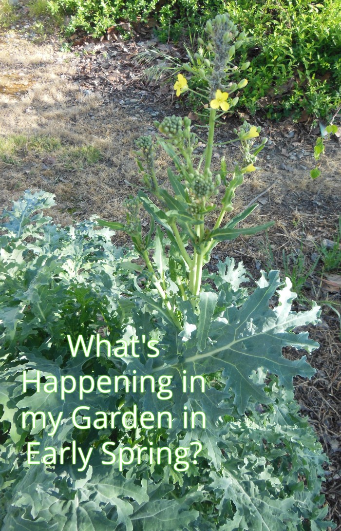 What's Happening in my Garden in Early Spring?