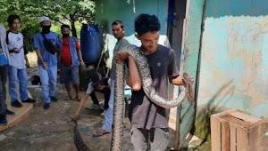 Seorang Bocah di Rawa Buntu, Tewas setelah dililit ular sanca