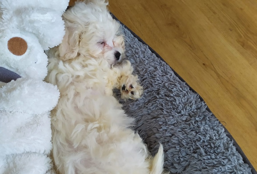 Puppy en fulltime werken