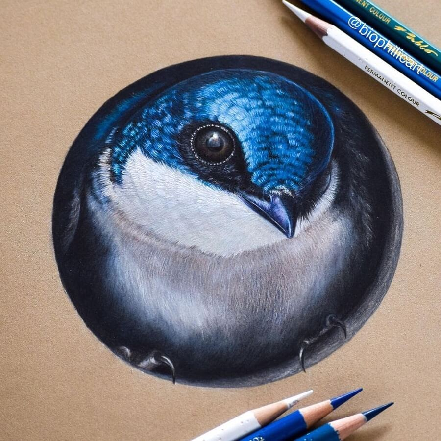 09-Looking-out-of-the-bird-box-Sallyann-www-designstack-co