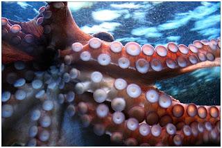 Hewan invertebrata, invertebrate, invertebrata, hewan tidal bertulang belakang,