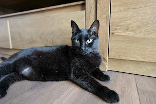 Lumix S5 cat photo