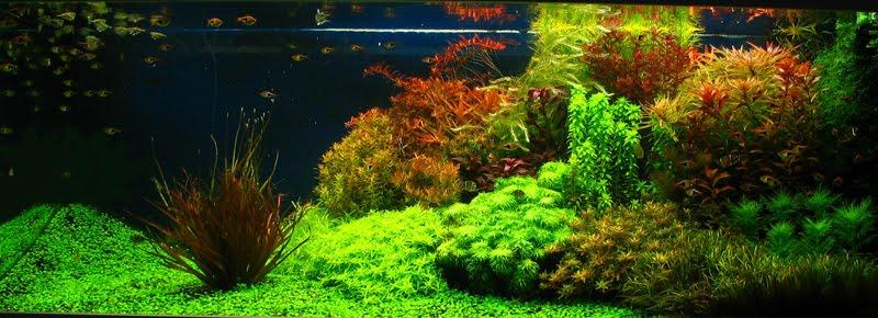 Nature Aquarium Style