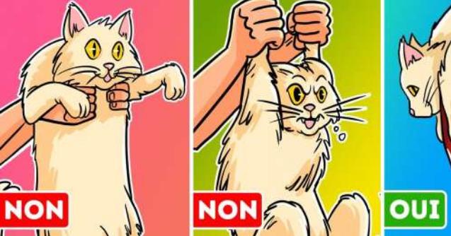 Un vétérinaire révèle comment nous devrions porter notre chat sans risquer notre vie