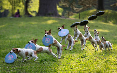 dog immunity boosters
