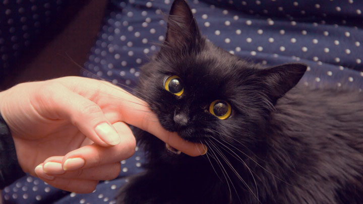 how to stop a cat from biting when petting