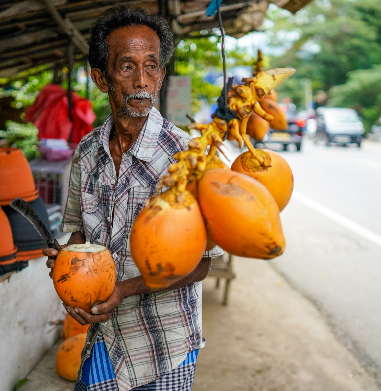 king coconuts, sri lanka