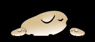 Młode świnki morskie