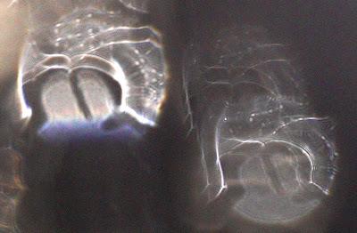 letters inside orbs