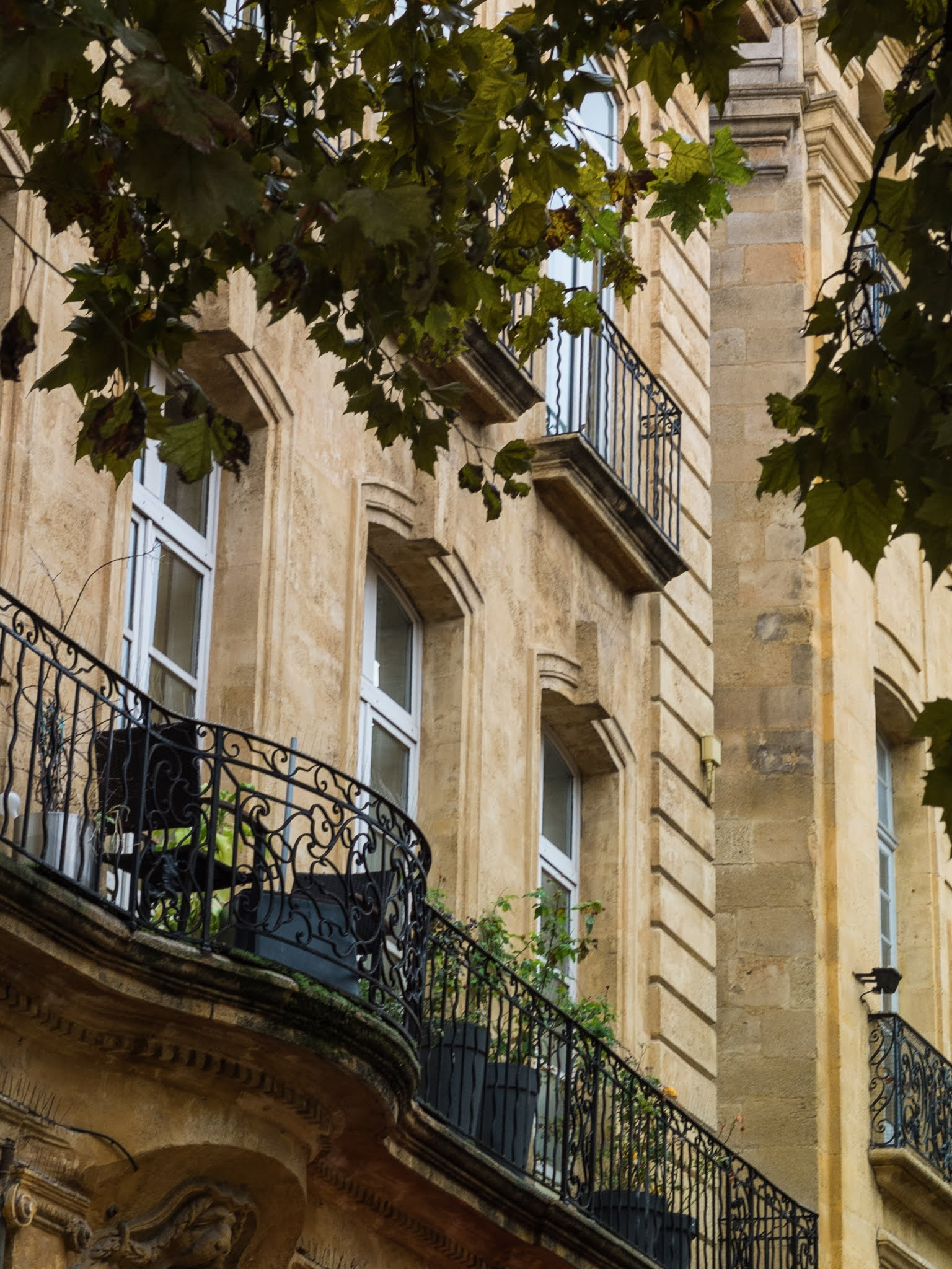 Looking up at tall windows and balconies from under a sycamore tree in Aix-en-Provence.