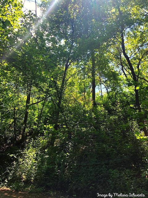 The sun highlights a ravine at Sheridan Park in Cudahy, Wisconsin.