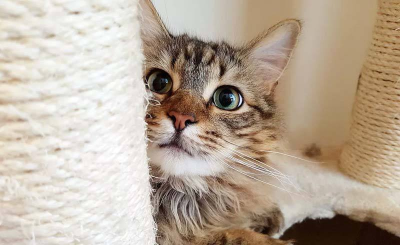 How to Stop Bad Behavior in Kittens