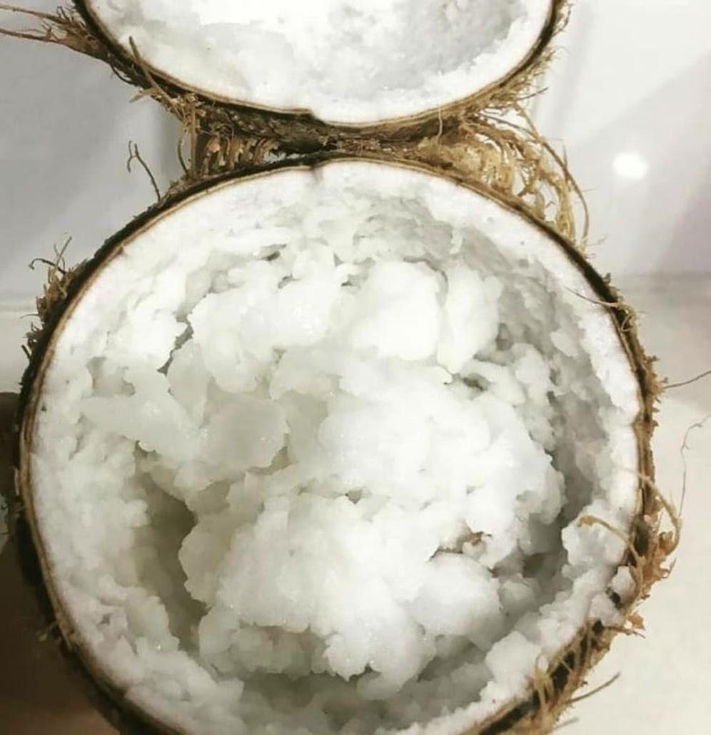 bibit kelapa genjah kopyor hijau premium pohon pedek sudah berbuah Kota Administrasi Jakarta Selatan