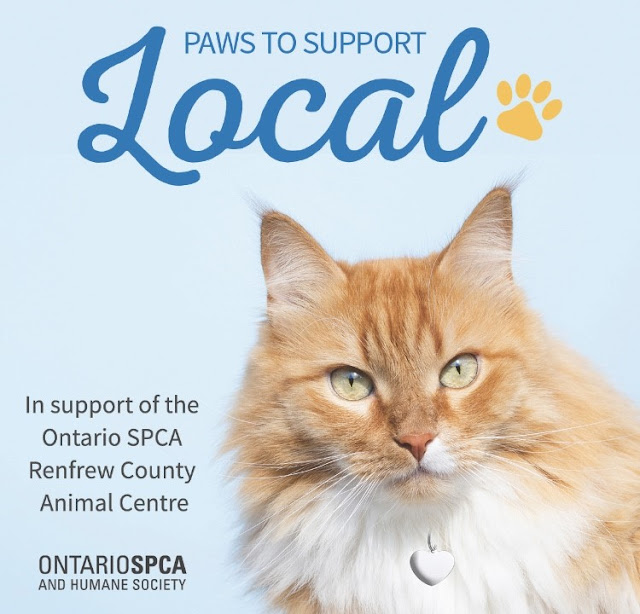 Paws to Support Local: How you can give back to local businesses and animals in need at the same time