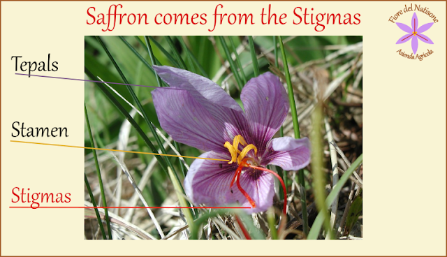 saffron flower parts