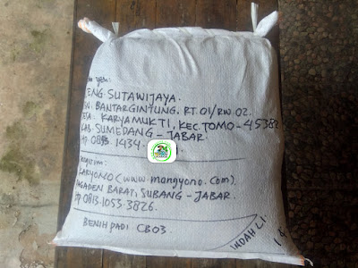 Benih Padi yang dibeli    ACENG SUTAWIJAYA Sumedang, Jabar.    (Setelah packing karung).