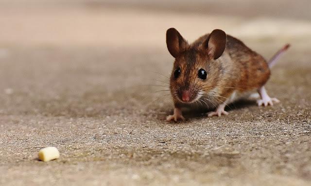 Worte mit Maus, Wörterliste Maus, Wissen Maus, Seniorenarbeit Maus