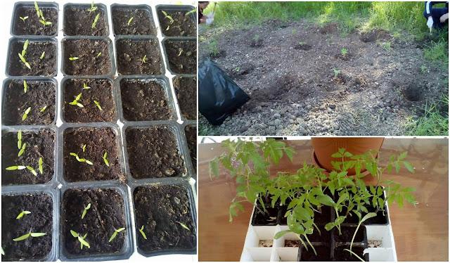 Μαθητές του 2ου Γενικού Λυκείου Ηγουμενίτσας έφτιαξαν λαχανόκηπο σε υπαίθριο χώρο του σχολείου