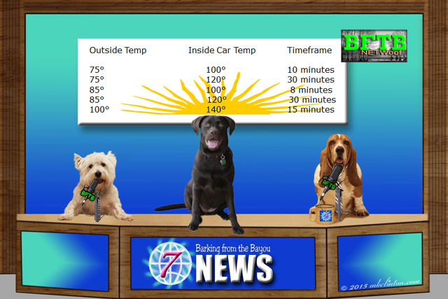 BFTB News featuring hot car temperatures