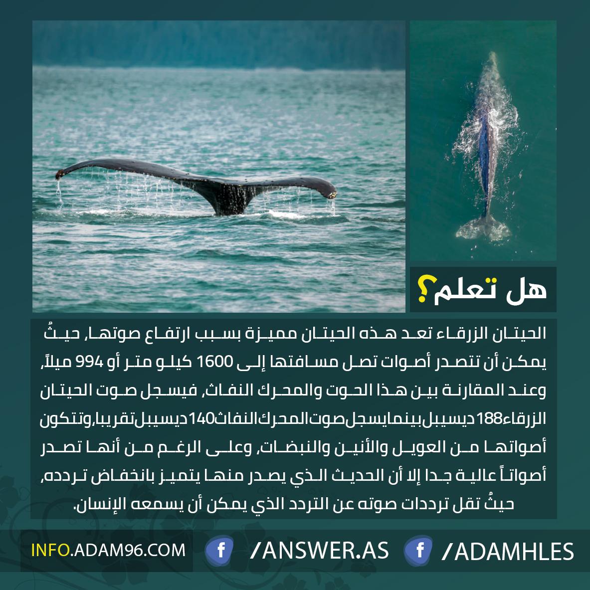 معلومات مدهشة عن الحوت الازرق
