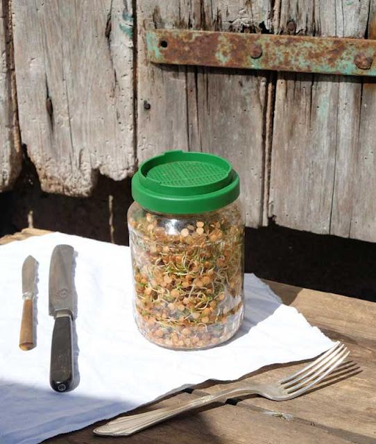 Sprossenglas zum selber Keimen mit grüne Plastikdeckel