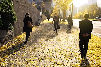 Street strewn with fallen leaves, Nagatacho, Tokyo.