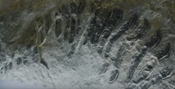 Arthropleura hewan besar hidup di jaman prasejarah