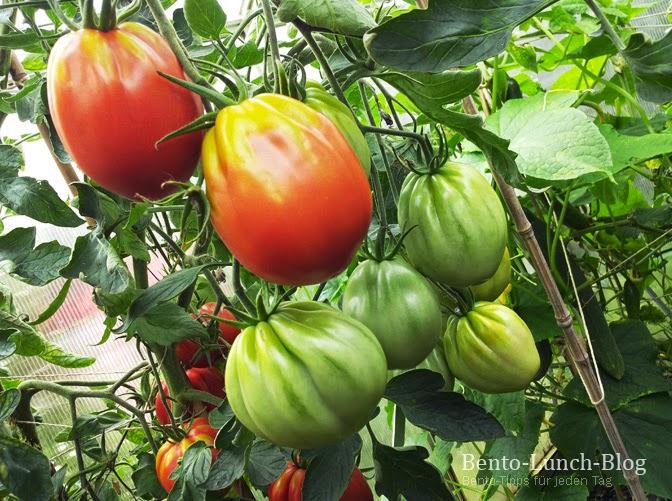 viele tomaten was damit machen