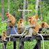 Inilah Bekantan, Satwa Endemik Mangrove Kalimantan yang Terancam Punah - Portal Rimbawan