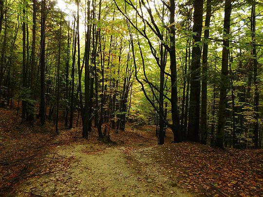 Schodzimy dalej lasem.