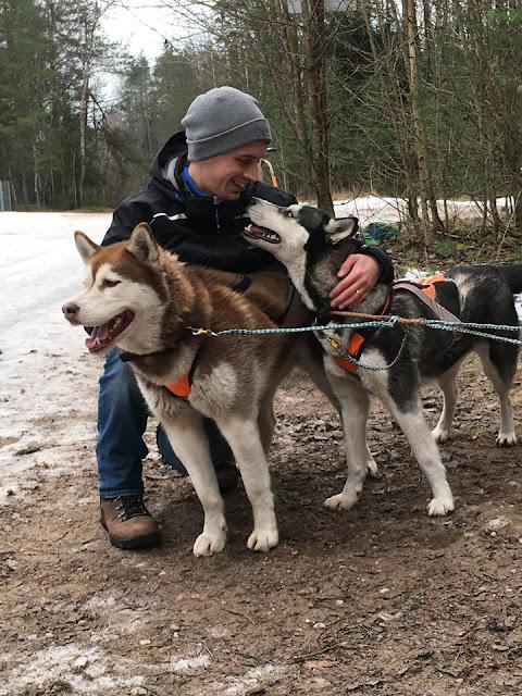 Sled dog huskie malamute riga latvia