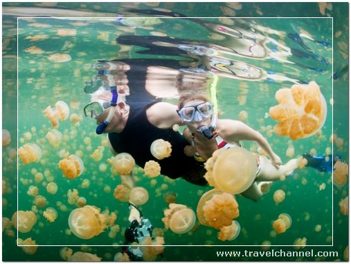 Jellyfish of the lake, Palau - 10 Amazing Best Place to Travel and Escape World