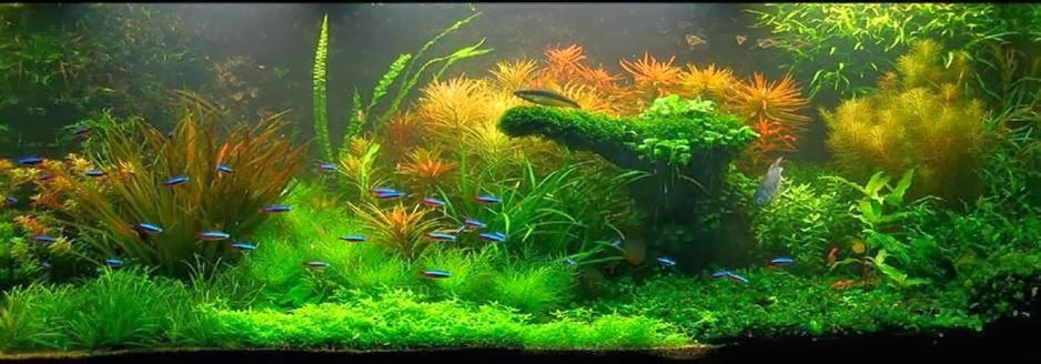 Aquascaping - Kebun dalam air - MyCherita