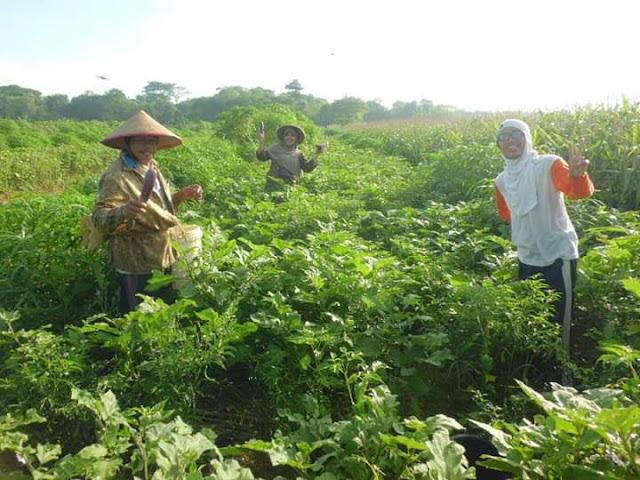 Berkebun Sebagai Gaya Hidup dan Berbahagia Makan Sayur dan Buah Hasil Tanam Sendiri - Suka makan sayur dan buah