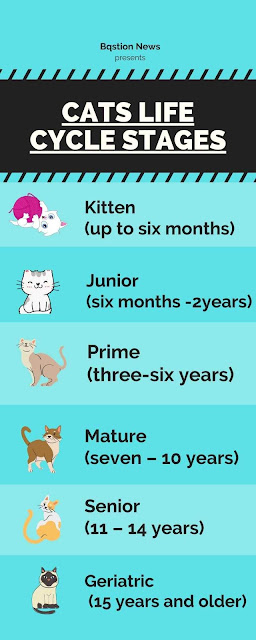 cats life cycle stages