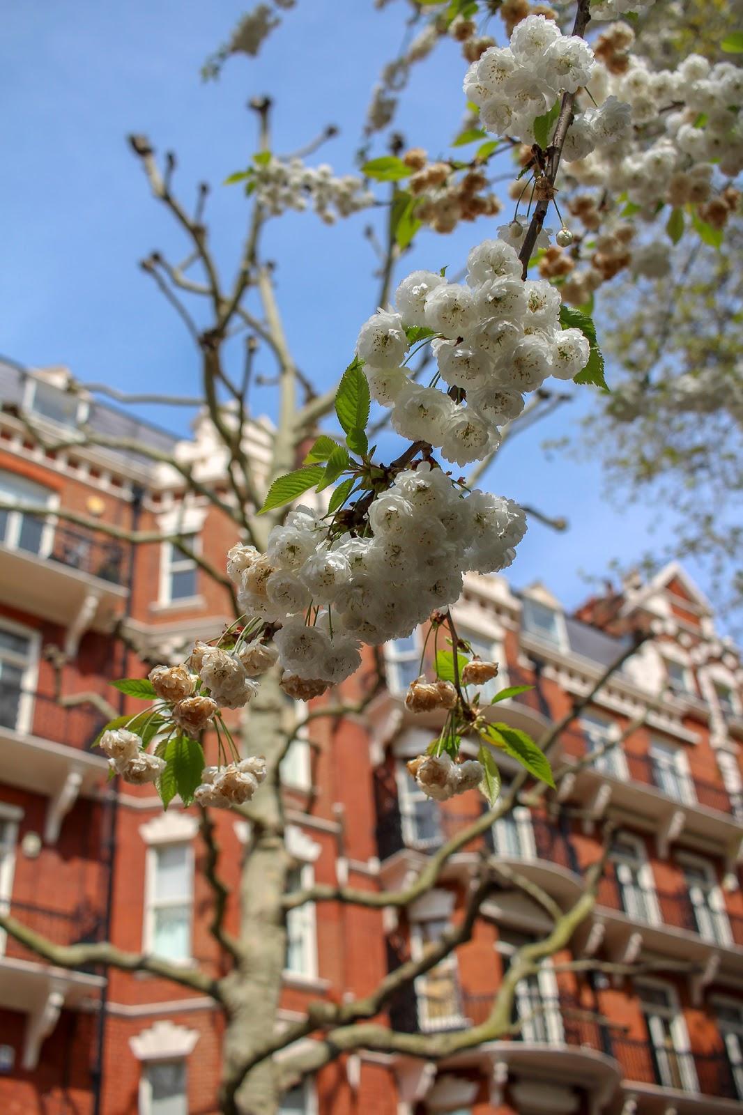 spring blooms london