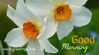 Fresh morning Wishes white flowers HD Greeting
