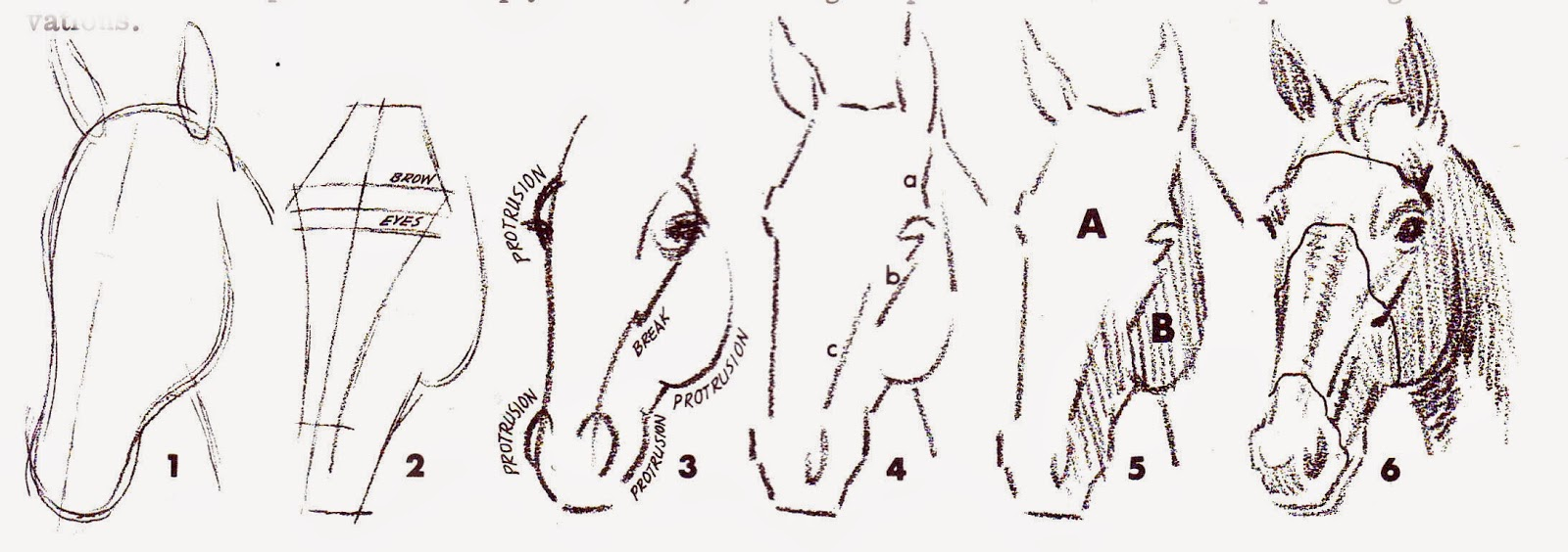 How To Draw A Horse Head Front View Solution For How To For Dummies