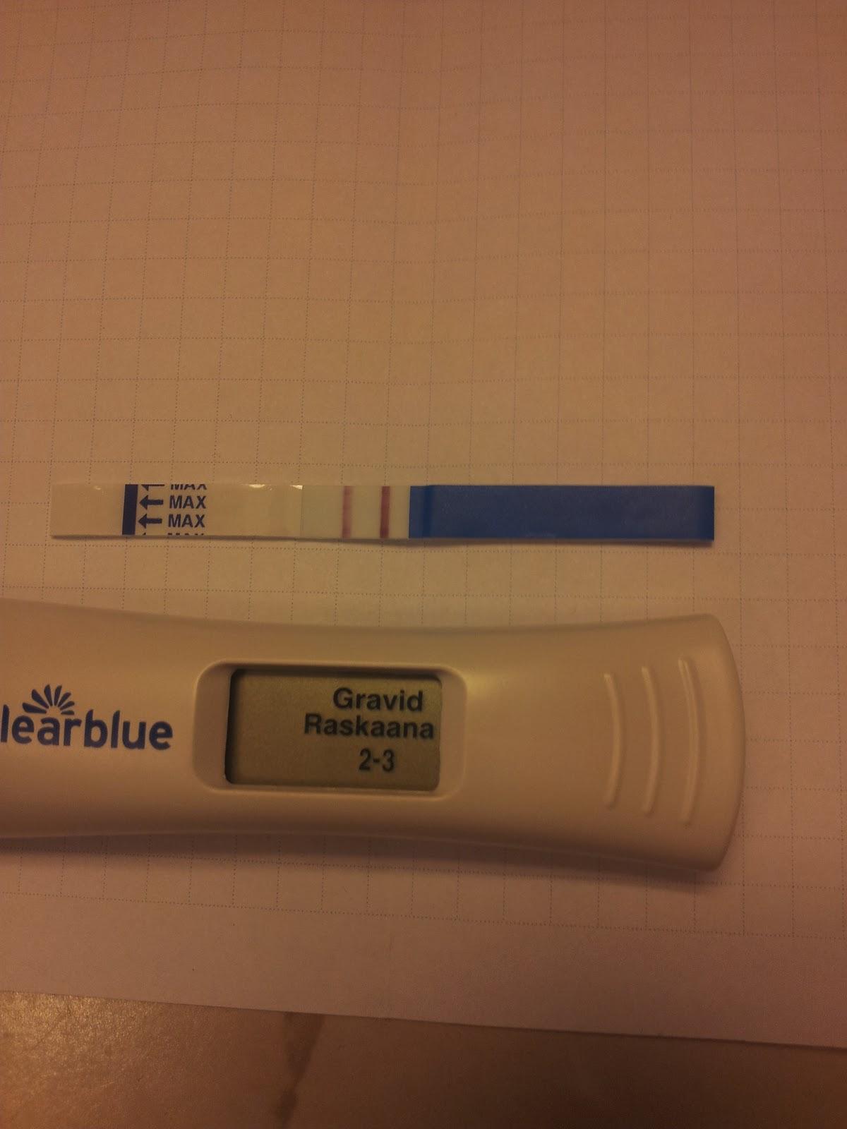 bim gravid