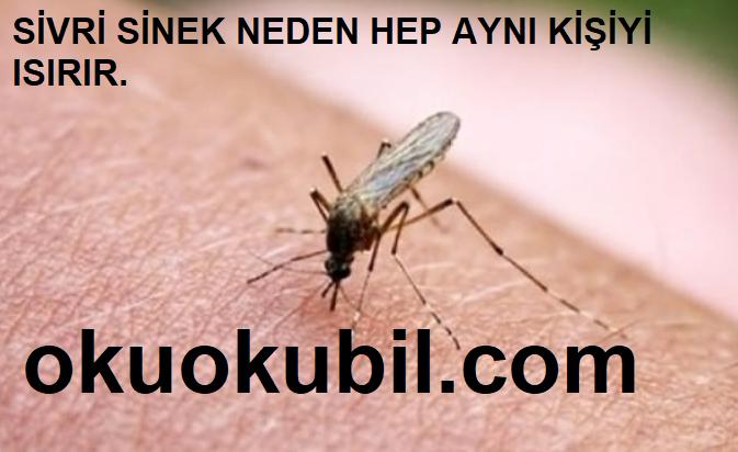 Sivrisinekler Neden Hep Aynı Kişiyi Isırır? İşte Nedenleri