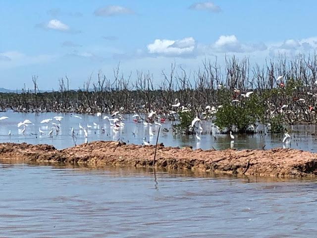 TURISMO: Cuare recupera flora y avifauna tras dragado de canal no navegable para controlar inundaciones.