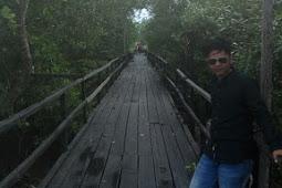 Mangrove Mengkapan | Keindahan Ekowisata Siak ( Lokasi dan Fasilitas )