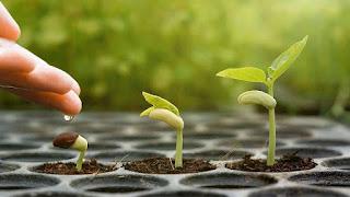 O Crescimento Espiritual Valida Nossa Fé