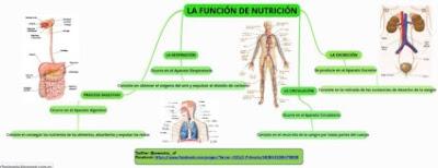 https://www.goconqr.com/es-ES/p/249084-LA-FUNCI-N-DE-NUTRICI-N-mind_maps