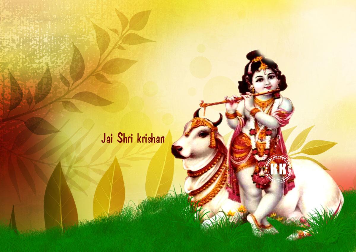 krishna with cow on grash HD desktop background