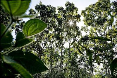 projetos agroecológicos para bioma Amazônia - MDE, amazônia, projetos socioambientais, projetos socioambientais amazônia, edital de projetos amazônia