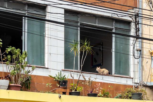 Gato na janela de um sobrado