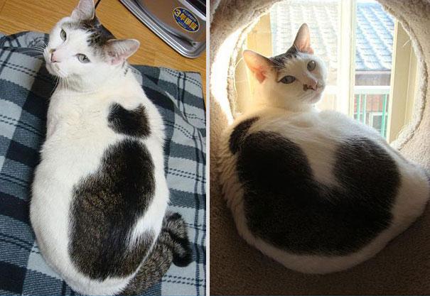 شكل القطة على ظهر القطة !,صور قطط,صور عن القطط,قطط مضحكة ,قطط جميلة ,قطط كيوت,