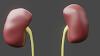 Kidney in 3d
