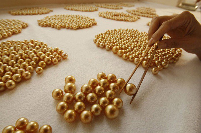 b4339db39 The Philippine Jewelry company which runs a pearl farm in Palawan produces  the rare gold South Sea Pearl, the Pinctada Maxima.